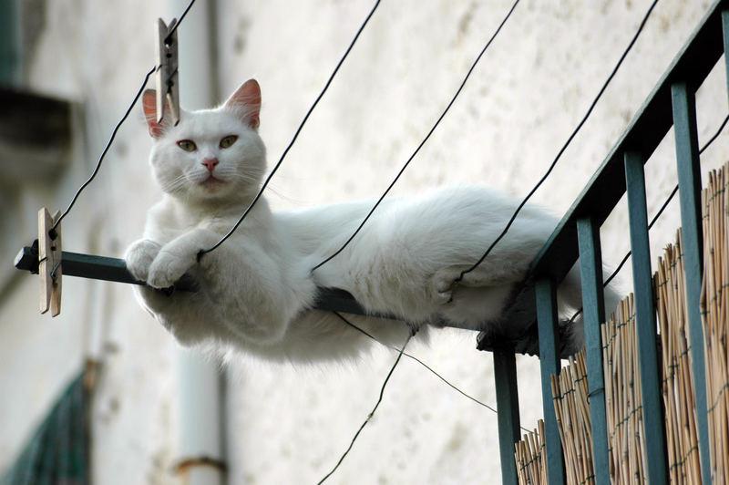 gatto funambolo