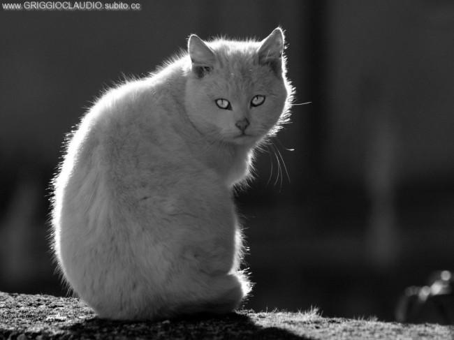 Gatto in controluce