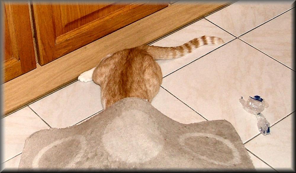 Gatto nascosto con coda al vento :-)))))))
