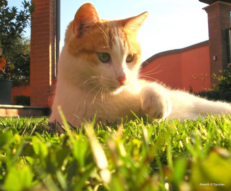 Gatto Rosso 2