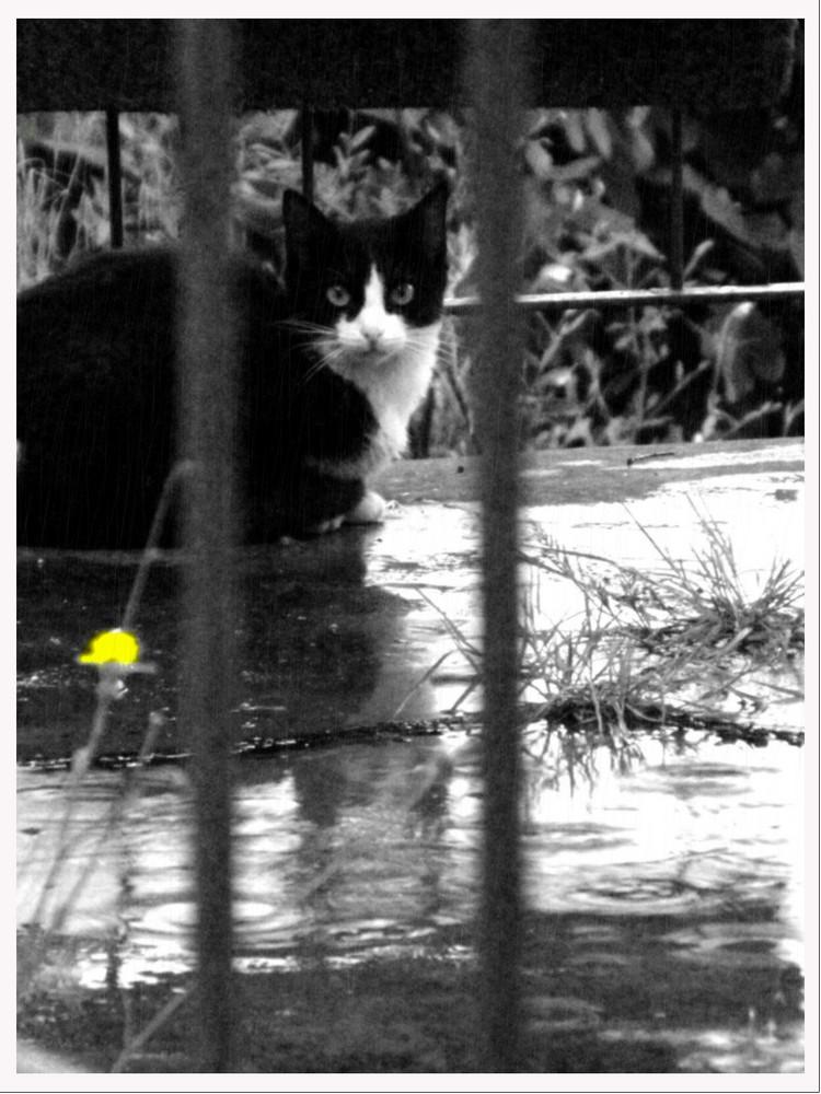 gatto sotto la pioggia