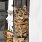 gatto su finestra