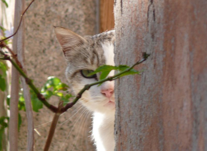 gatto timido