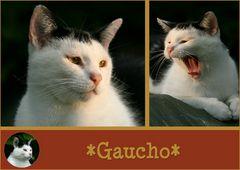 *Gaucho*