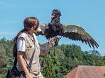 Gaukler Nelson bei der Flugshow im Weltvogelpark Walsrode