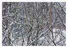 Geäst im Winter