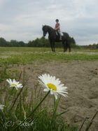 Géant d'ébène, entre azur et herbe