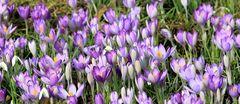 Geballte Ladung Frühling