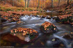 Gebirgsbach im Herbst II