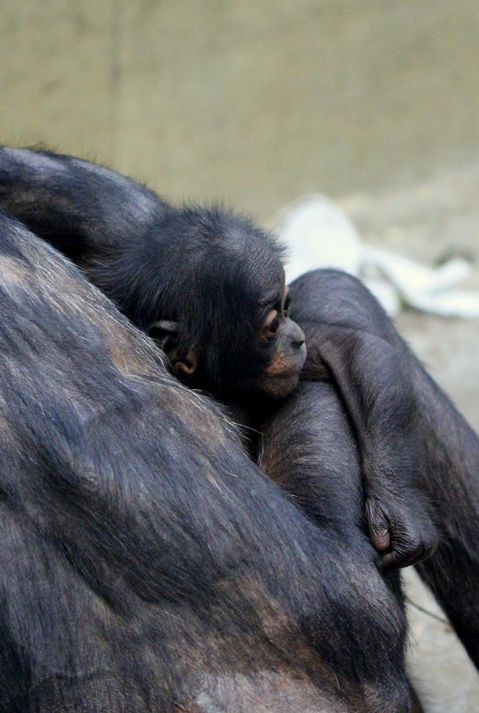 Geborgen in Mamas Armen