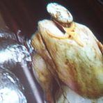 gebratenes huhn im fernsehen