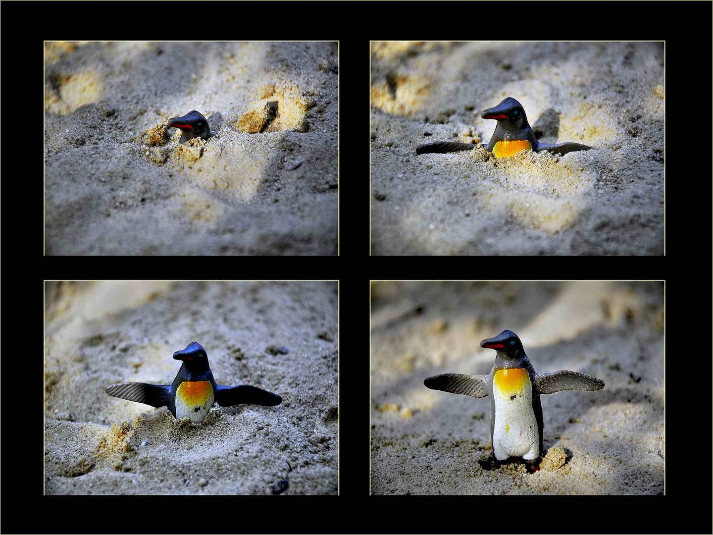 Geburt des Pinguins