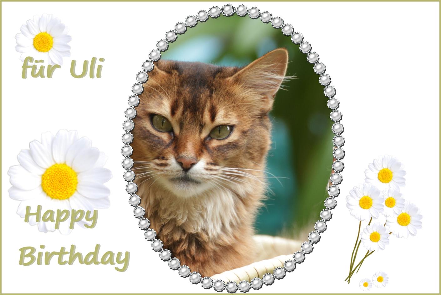 Geburtstagsgrüße Für Uli Foto Bild Spezial Katze Geburtstag
