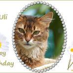 Geburtstagsgrüße für Uli