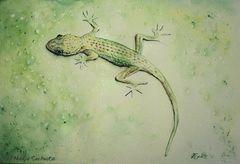 -Gecko an der Wand-