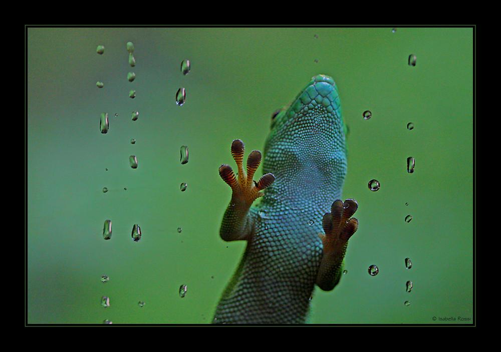 Gecko-Füsschen