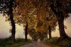 Gedanken an den Herbst