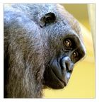 Gedanken eines Gorillas