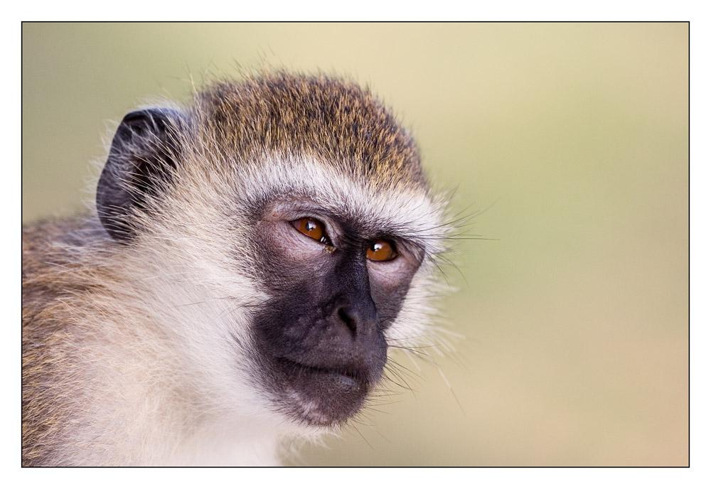 Gedanken eines Primaten - keiner wird sie erraten ...
