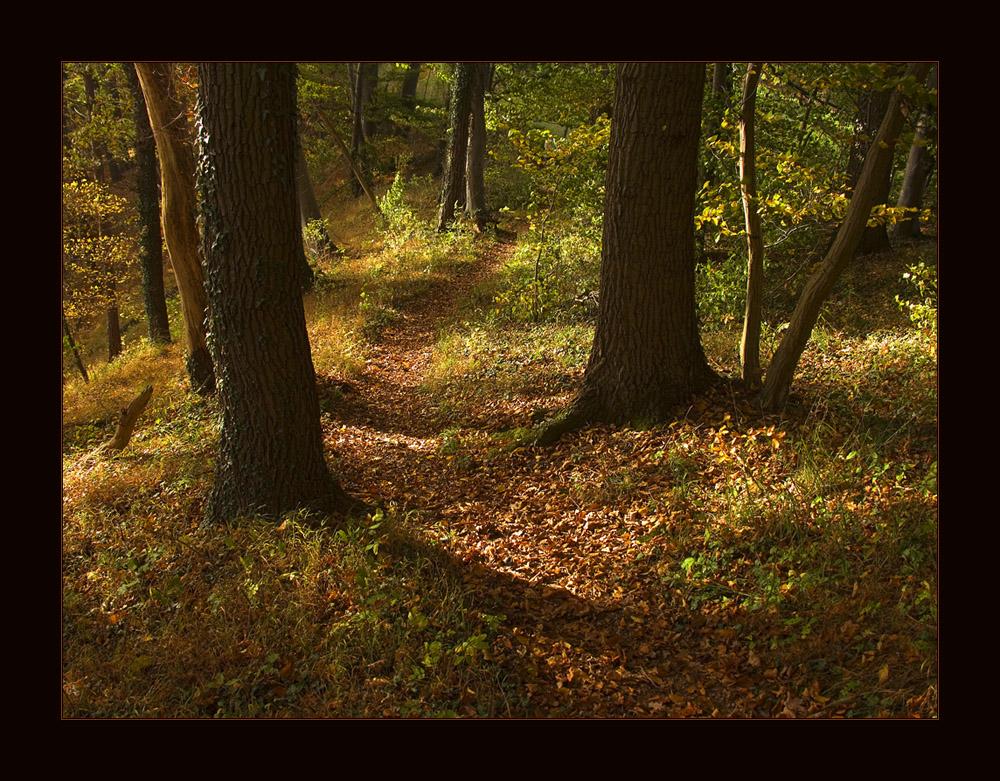 ...gedanken-verloren.. durch den Herbstwald schlendernd... (s. ausführliche KOMPOSITIONS- ANALYSE !)