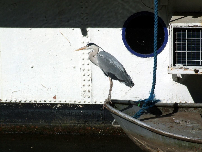 Geduld beim Fischen in Saarbrücken