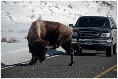 Geduld braucht der Yellowstone Besucher