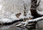Geese in snow-covered park