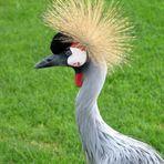 Gefalle ich euch mit meiner neuen Frisur?