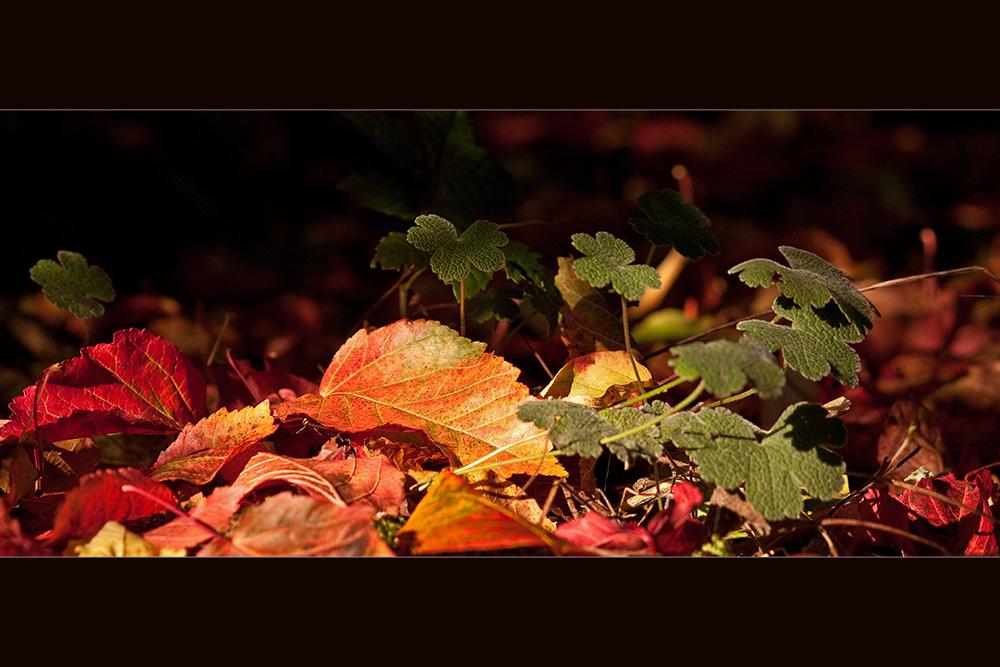 Gefallenes Herbstlaub