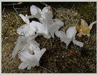 gefallenes Weiß