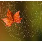 Gefangen im Spinnennetz