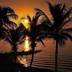 ..gefangen in den Palmenblättern..