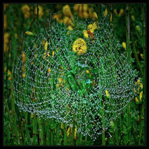 ~ Gefangene Perlen ...