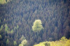 gefangener Baum