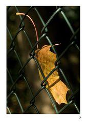 gefangener Herbst
