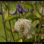 Gefederte Blume