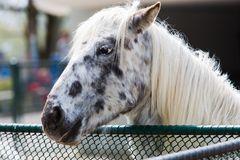 Geflecktes Pferd