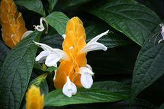geflügelte Blüte
