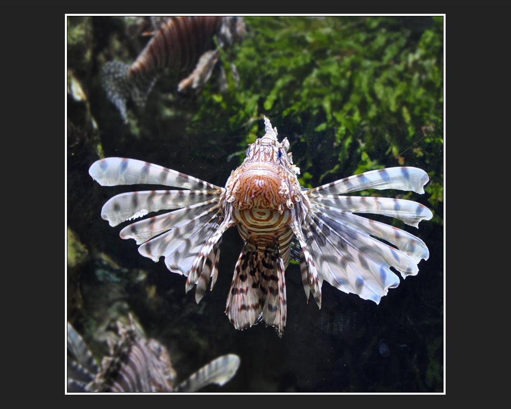 Geflügelter Drachenkopf
