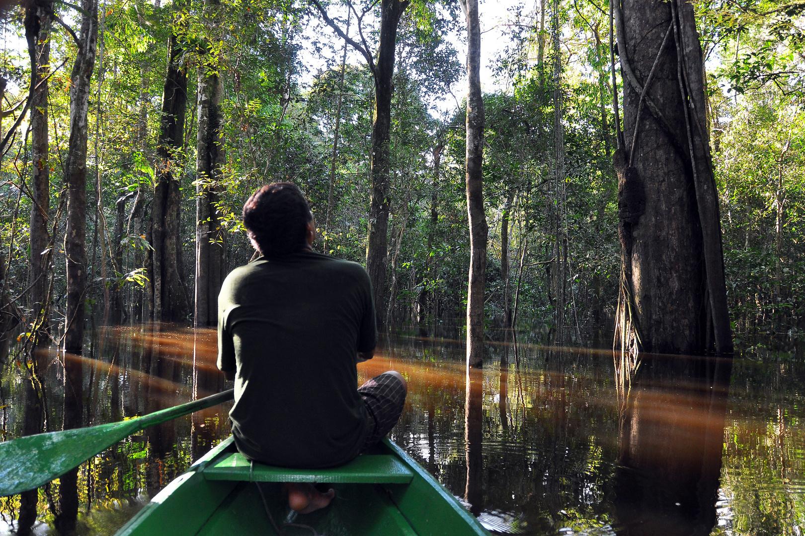 gefluteter Amazonas in Brasilien , mit dem Kanu von Baum zu Baum