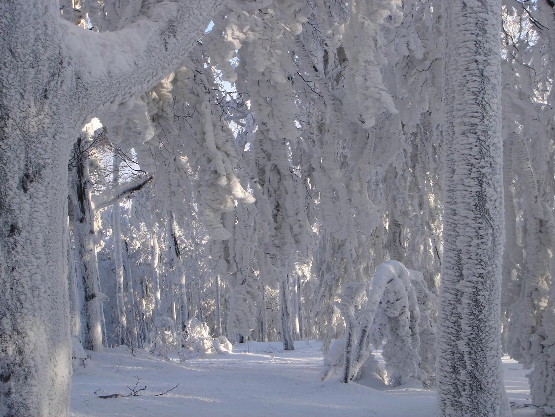 Gefrorender Baum