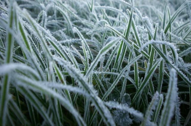 Gefrorene Weide