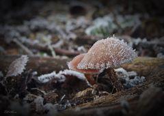 gefrorener Pilz