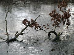 gefrorener Teich
