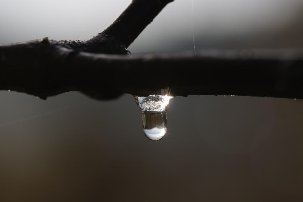 gefrorener Wassertropfen am Apfelbaum