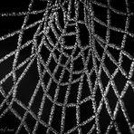 Gefrorenes Spinnennetz