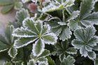 """...""""gefrostete"""" Blätter...."""