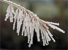 Gegen den Frost...