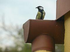 Gegen Nestbeschmutzung