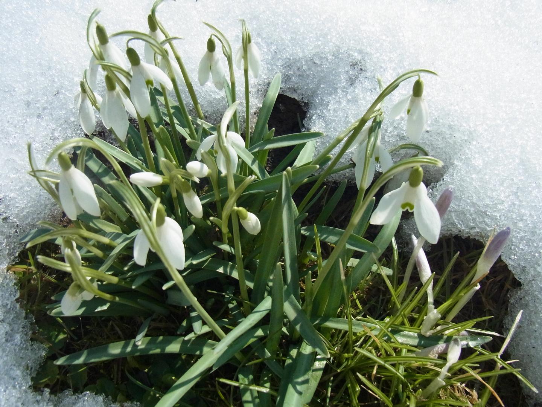 Gegen Schnee u. Eis gekämpft